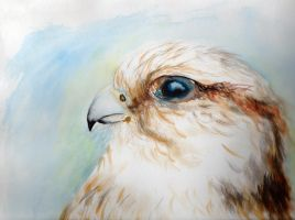 Bird Watercolor by KainOc