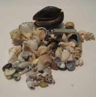shells I by GeshemStock