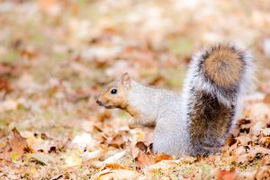 Orange Leaves and Fluffy Tail by Karelliann