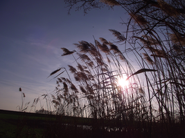 springtime marsh by Lucy-Redgrave