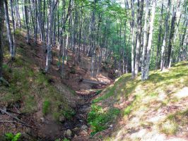 Mountain forest by valsomir