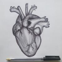 Heart  - Pen Sketch by annamariart