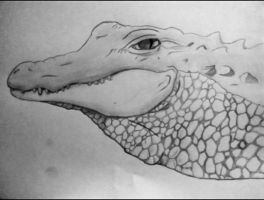 Alligator by McKravendrawings