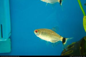 Fish Stock 0004 by phantompanther-stock