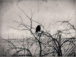 crow v2. by perpetuummobile