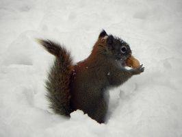 boxing day nuts by Lou-in-Canada