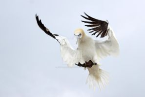 Incoming by Jamie-MacArthur