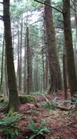 Ecola Forest 1 by FoxStox