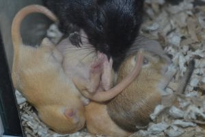Isis and Pups, 13 days old by Spiremagus-Esquire