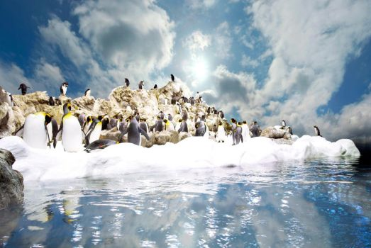 Penguins o1 by rabbit888