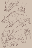 Wolf Sketches by Lanasy