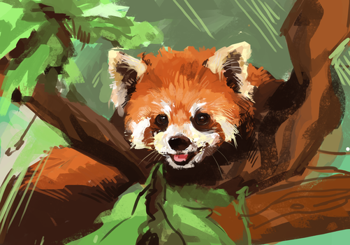 Red Panda by acorns