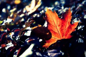 Some late autumn by arvael18