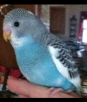 Little birdie needs a name by Nightrizer