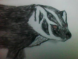 Midnight the Badger by zyker325