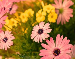 My garden flower by enemia