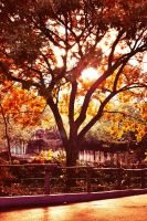 Afternoon in November - Retouched by Odd-Fate