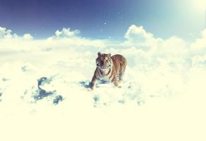 Snow clouds Tiger by FeiMey