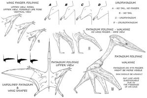 What You wanted to know about Pterosaur Wings by Smnt2000