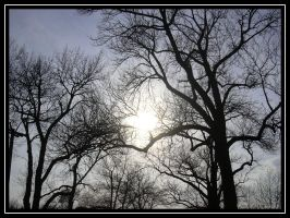 The Sun in the Trees by alana-m