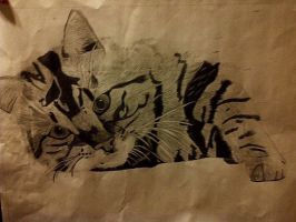 My kitty cat I drew in art class by AskTuxSonicsSister
