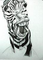 Zebra - DUDE! by TedTonkin