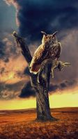 Owl by robhas1left