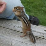 Chippy IMG 3265 - Version 2 by organblower