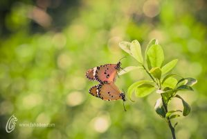 and When they Love by fahadee