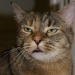funny face kitty. by Janlover