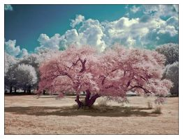 A Fantasy In Pink by IngoSchobert
