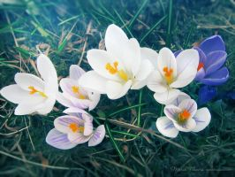 March Flowers 6 by love1008