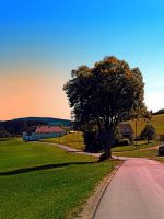 A tree, a road and summertime by patrickjobst