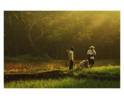 Farmer's family by yodhi19