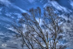 Tree Top HDR by Alabamaphoto