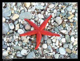Starfish by Snapshooter