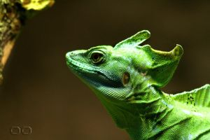 jESUS cHRIST lIZARD by NENE00