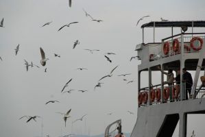 078 seagulls from istanbul by moonandnight