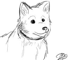 Quick Dog Sketch by Silverlykta