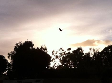 A Bird Flying Over the Sunset by LoadingArtist