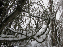 Curly Tree in the Snow by Leathurkatt-TFTiggy
