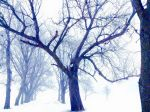 Winter Trees by vix26d