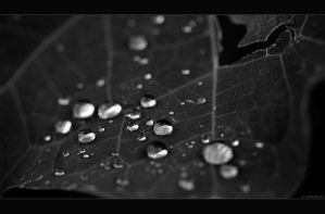 The Rain Collector by Limaria