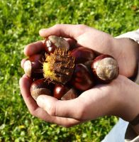 hands full of chestnuts by HeretyczkaA