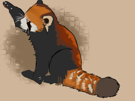 Red Panda Study. by CrowCaps