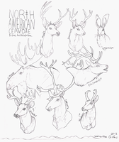 Cervidae, Antilocapridae + Mythical Rabbits by hippiej0e