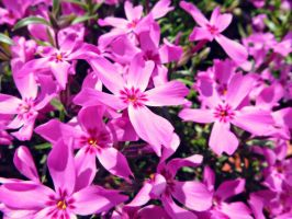 Blanket Of Pink by kml91225