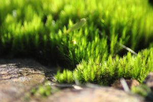 Moss by Tamamantix