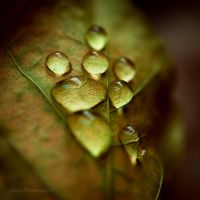 crying leaf XII by JoannaRzeznikowska