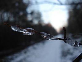 The Twig with Ice by Lukotus